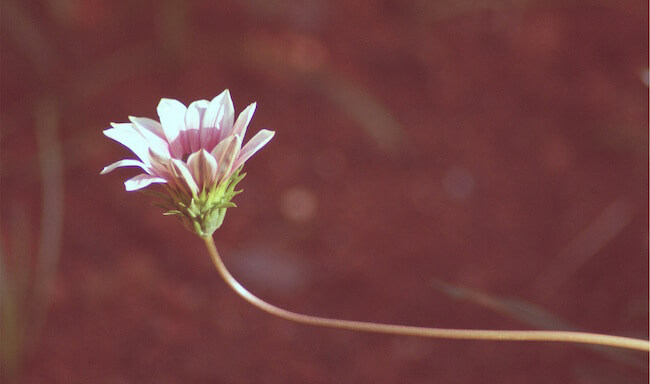 bloom is in bloom