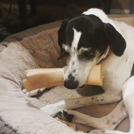 A picture of my dog after she fetched her bone.