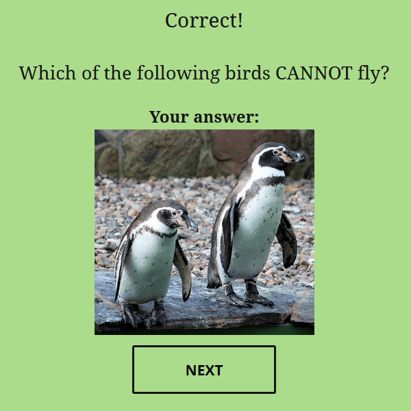 quiz-cat-correct-answer